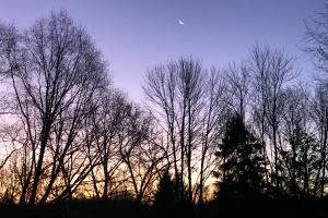 Appalachian trees as sunset